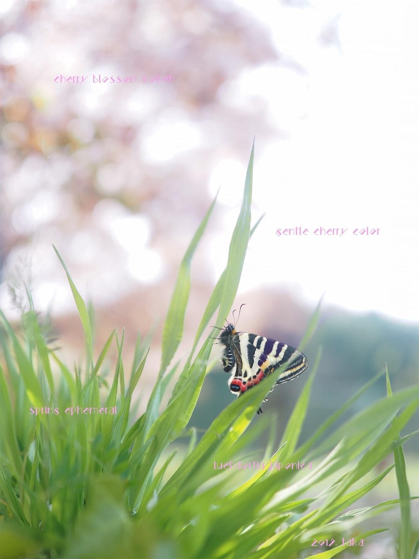 f:id:ButterflyTakaji:20190822011846j:image