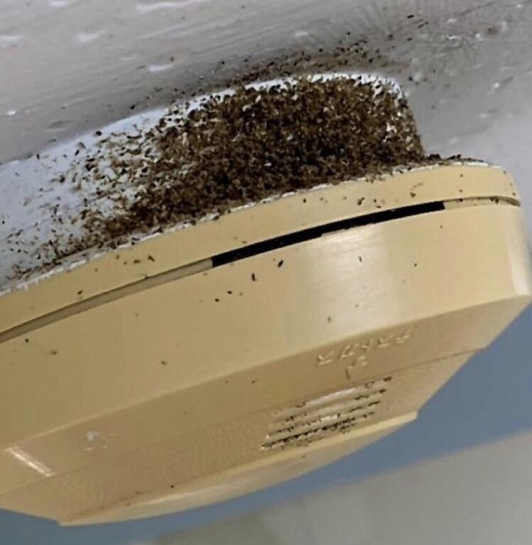 ゴキブリ の フン