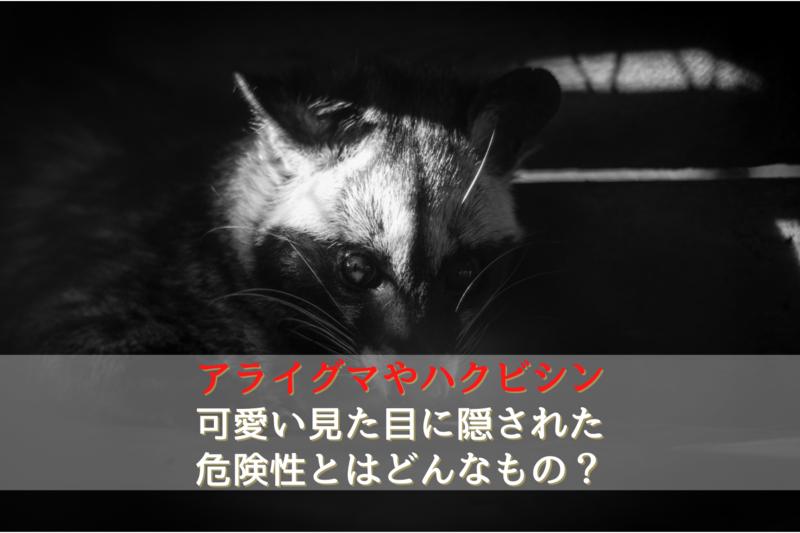 アライグマやハクビシンの被害について