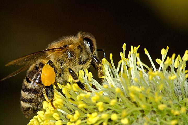 ハチの被害