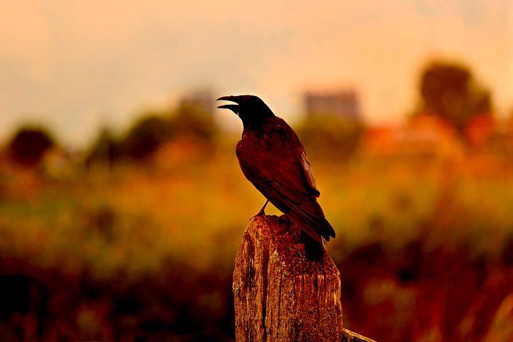 日本で確認されている害鳥