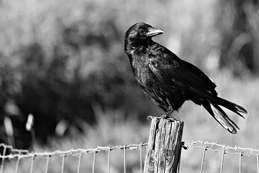 個人で可能な害鳥の撃退方法
