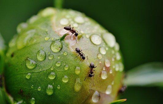 アリの発生