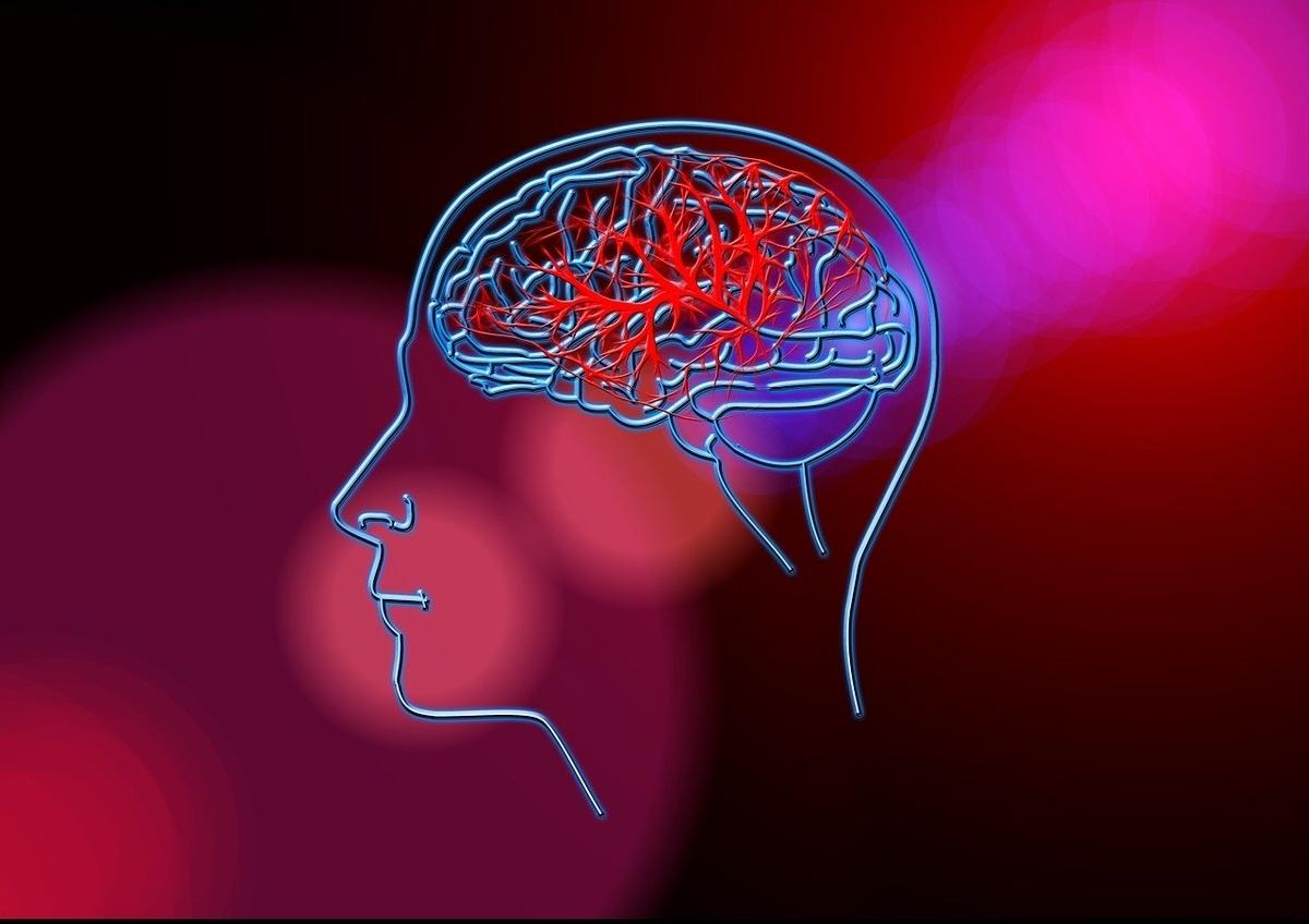 頭皮の血行促進には本当に育毛効果があるのか?