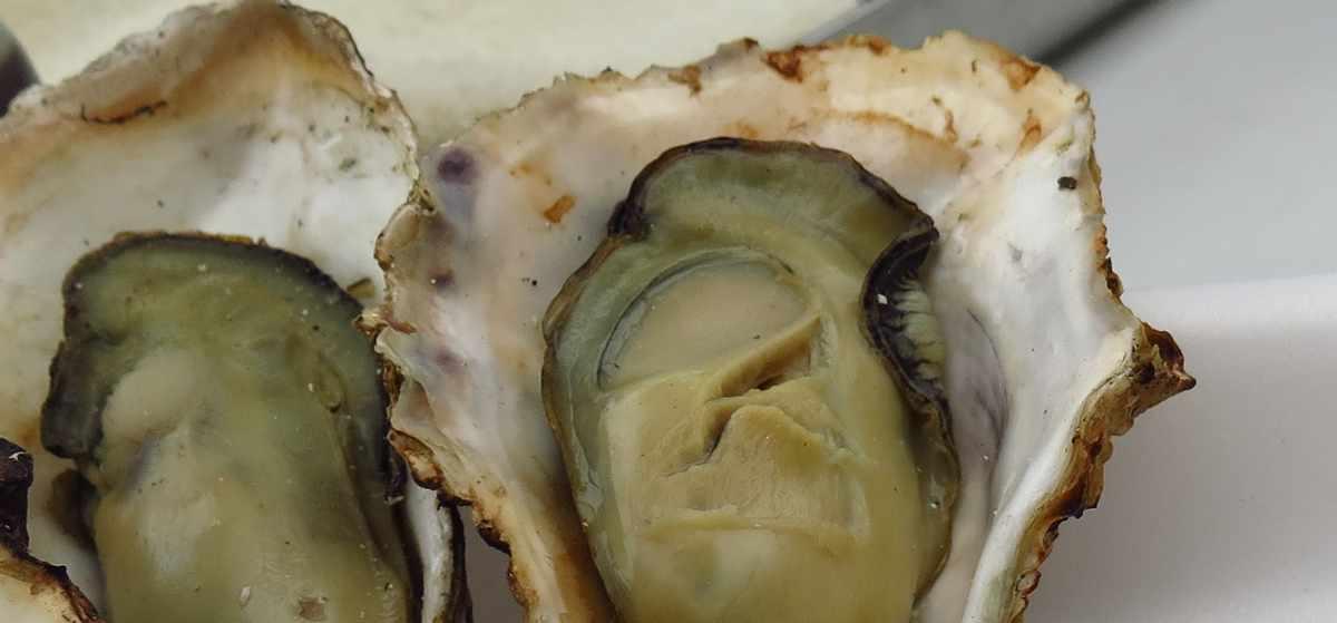 牡蠣には亜鉛が豊富に含まれているので育毛効果があるかもしれない
