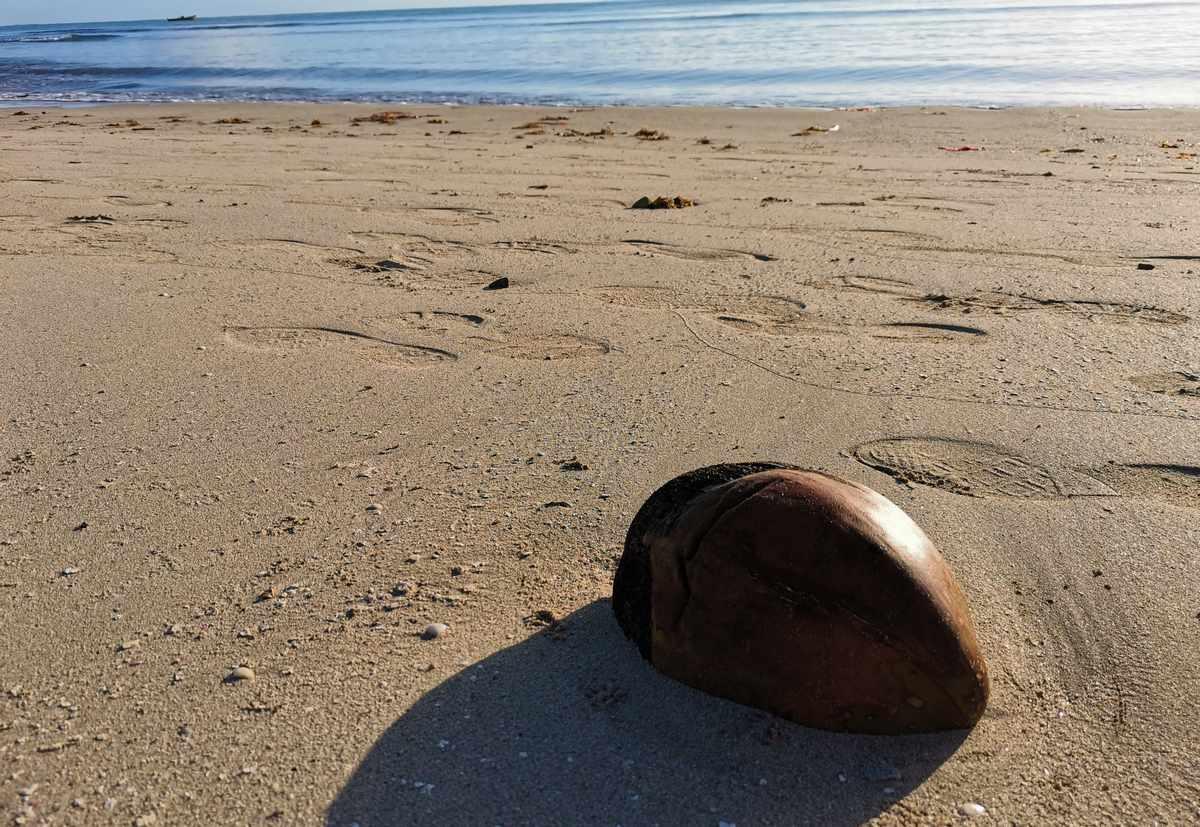 自律神経失調症の僕は朝海を散歩して癒されている。