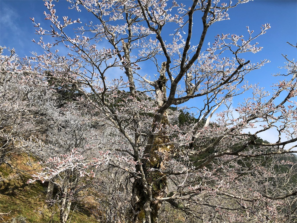 f:id:Camino_del_Taka_2018:20190428151148j:image
