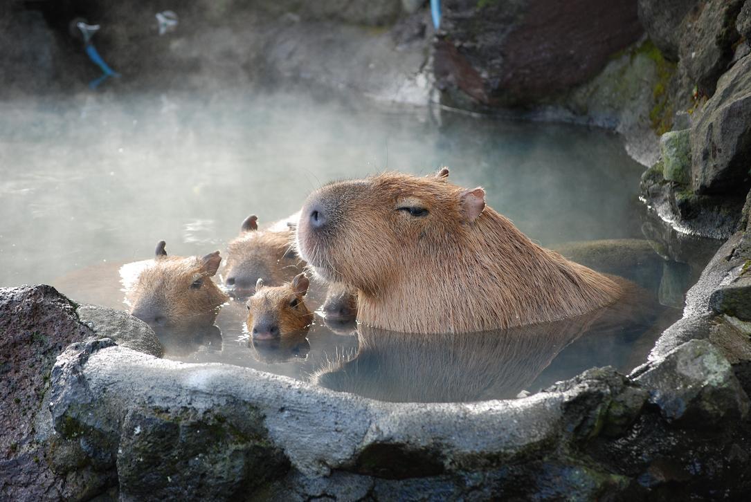f:id:Capybarablog:20210614190820j:plain