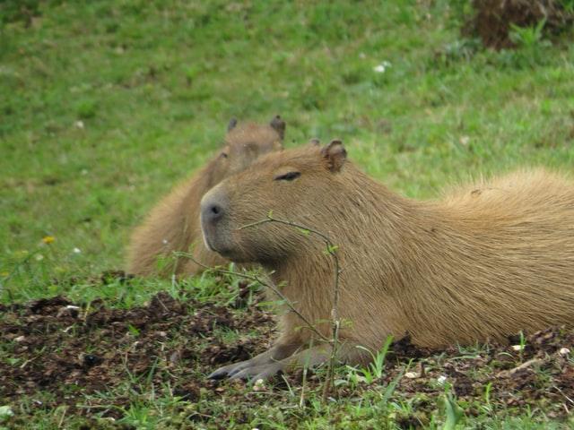 f:id:Capybarablog:20210621232509j:plain
