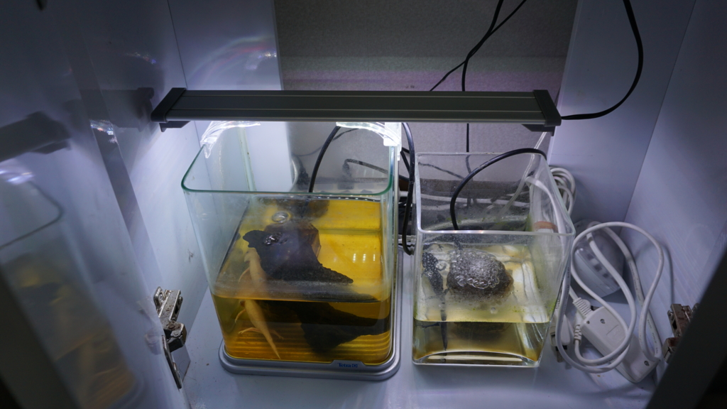 f:id:Capybarawater:20161230002415j:plain