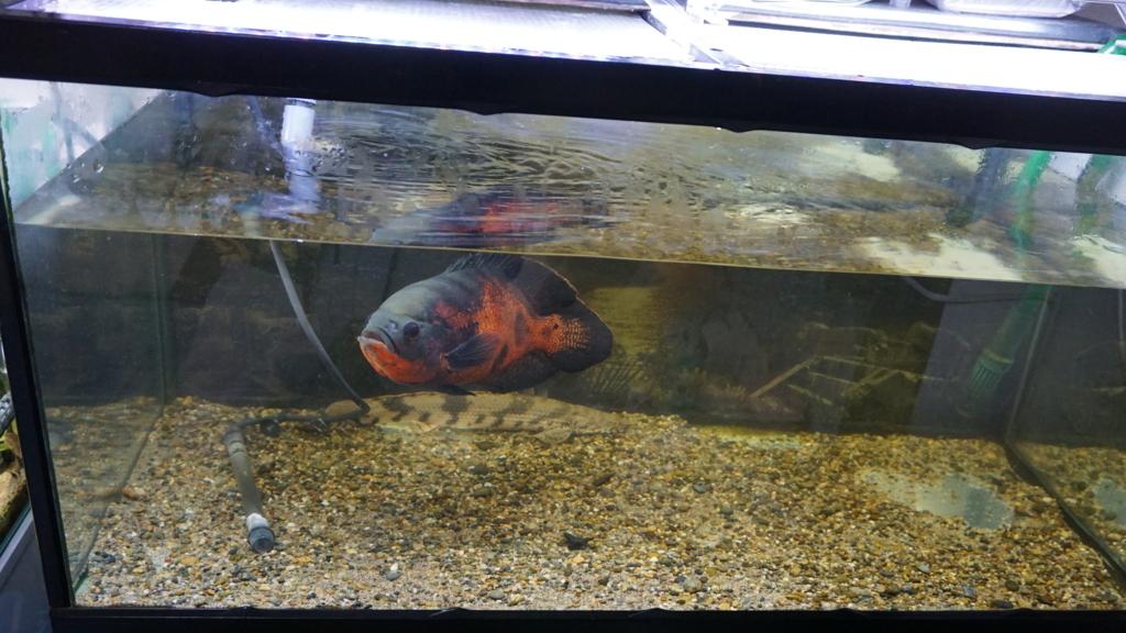 f:id:Capybarawater:20171110231616j:plain