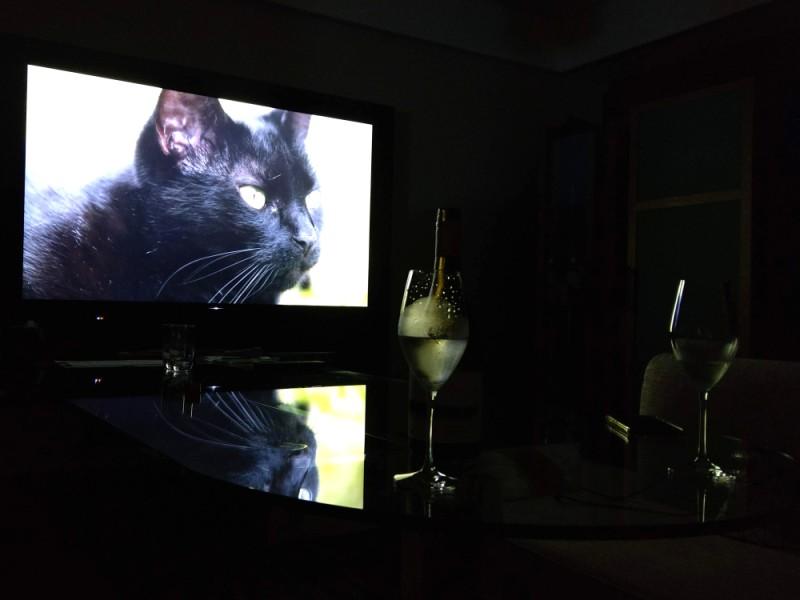 暗い部屋で大画面テレビに猫が写っている
