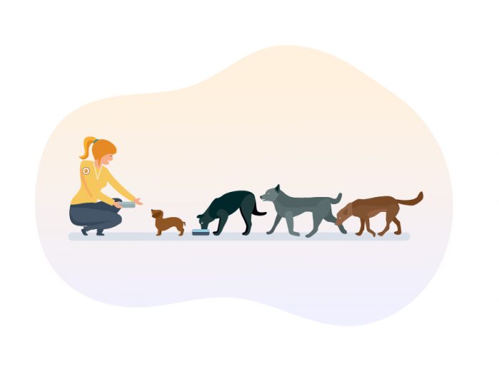 Grants for animal rescue