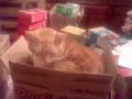 Garfield Sleeping in Cookie Box