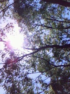 2008年ゴールデンウィークの楠を通した木漏れ日