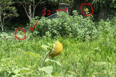 f:id:Cha-co:20110705125458j:image