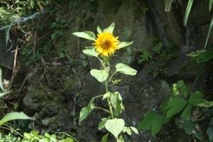 f:id:Cha-co:20110705125642j:image
