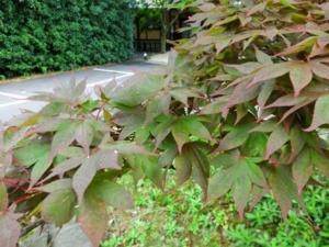 f:id:Cha-co:20110809125501j:image