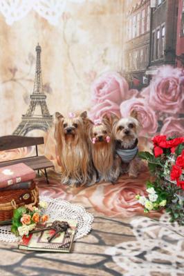 f:id:Cha-co:20111118114209j:image