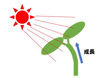 f:id:Chankana:20200630214829p:plain