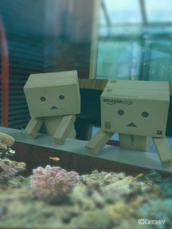 ダンボー水族館に行く