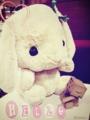 [ダンボー/Cherry] ダンボー、ウサギさんと仲良し