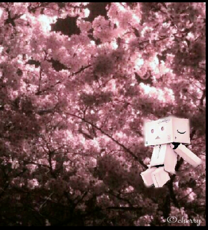 ダンボー夜桜