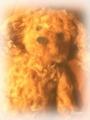 [トイプー Cherry 刈っ] うちのトイプのカットの毛で作った犬ぐるみ