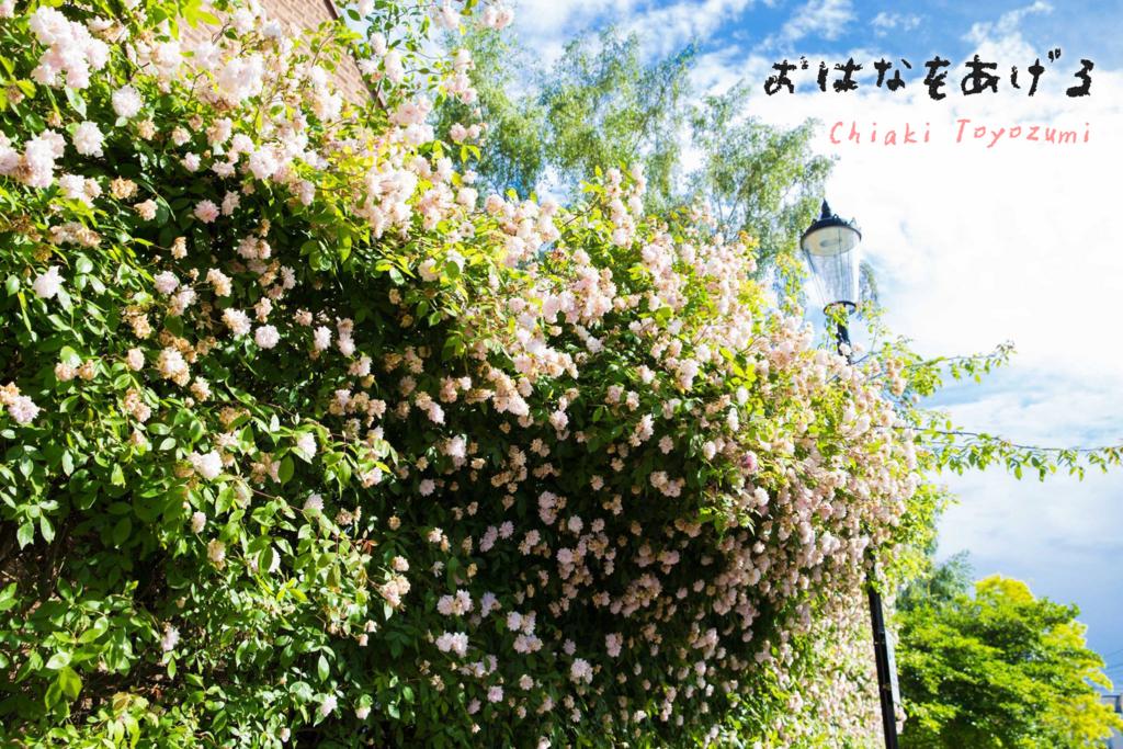 f:id:ChiakiPhoto:20171220222258j:plain