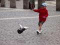 ハトを追う少年