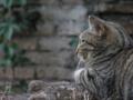遺跡に住むネコ