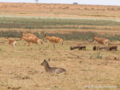 草原の動物たち