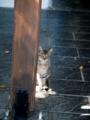 ギリシャのネコ