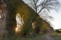 水道橋遺跡と木と夕日
