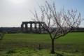古代ローマの水道橋遺跡公園の梅