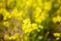春のトスカーナ