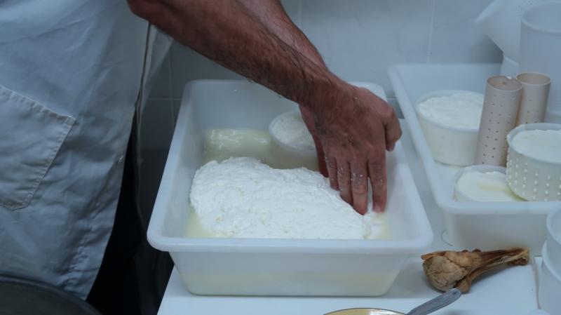 チーズ製造工程