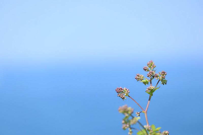 岬の風景4