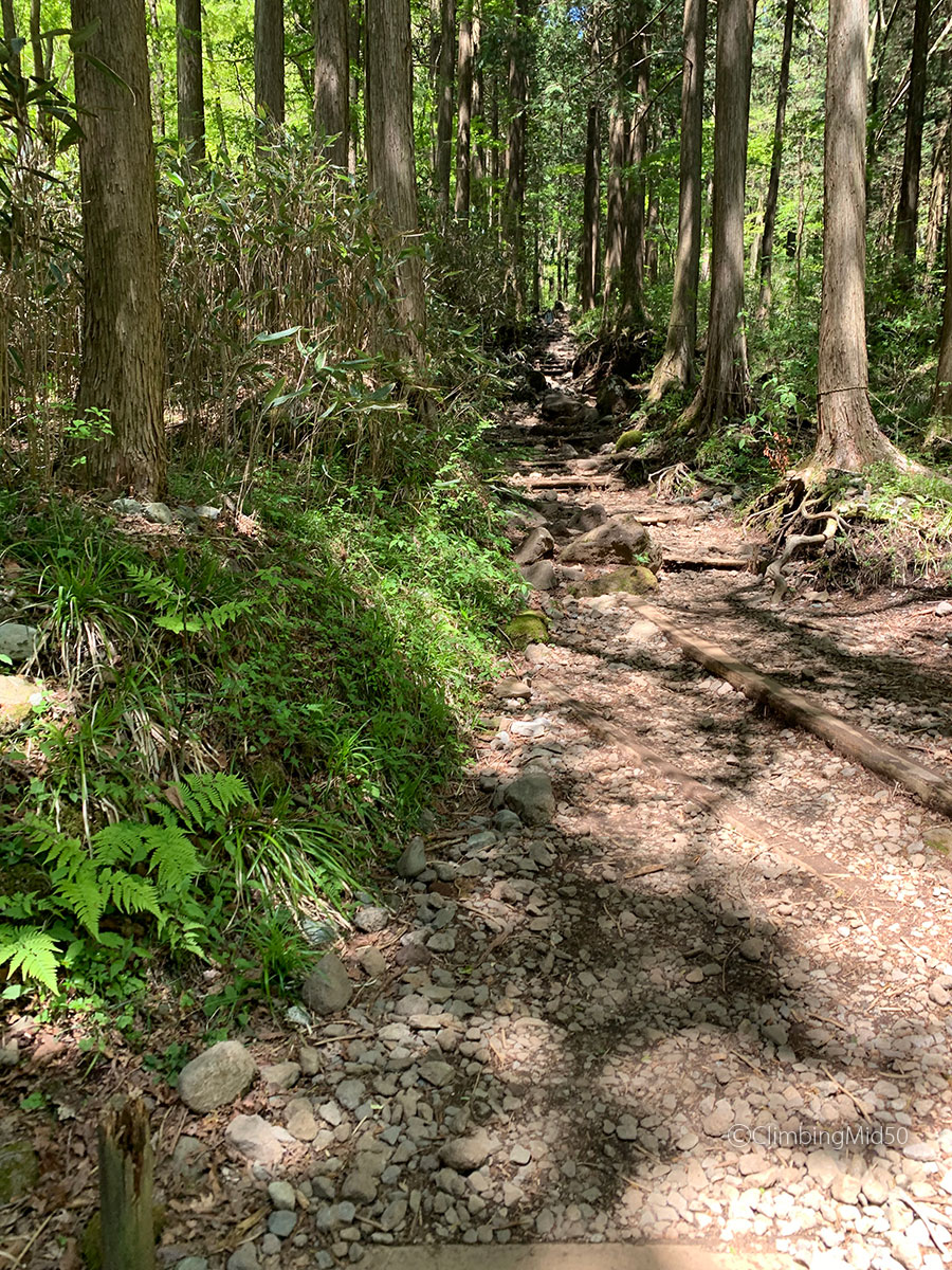 コースはほぼ樹林帯