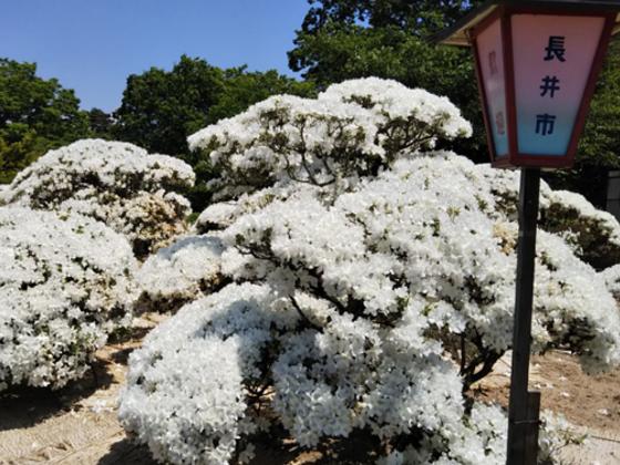 白つつじ公園