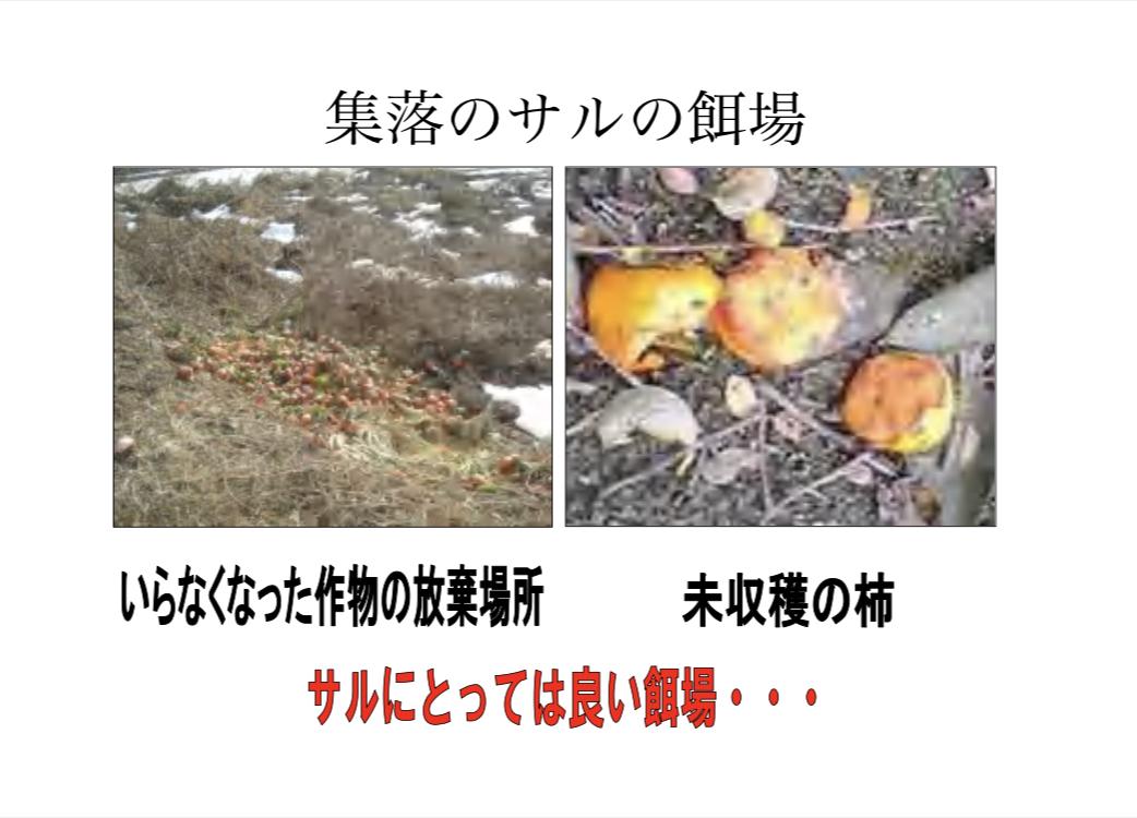 f:id:Cottage_d_Ochanomizu:20201004111718j:plain