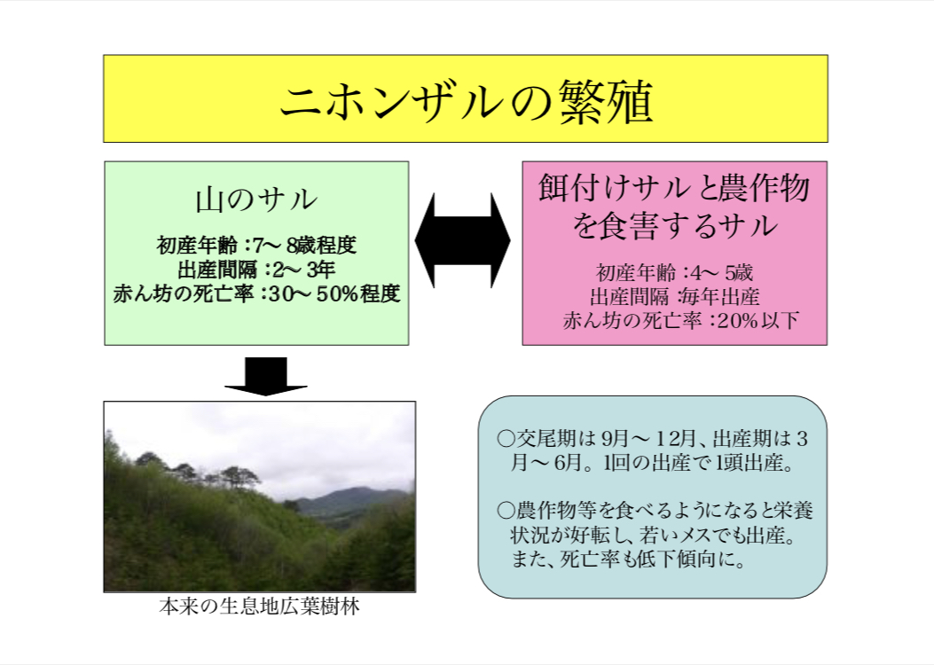 f:id:Cottage_d_Ochanomizu:20201004112620j:plain