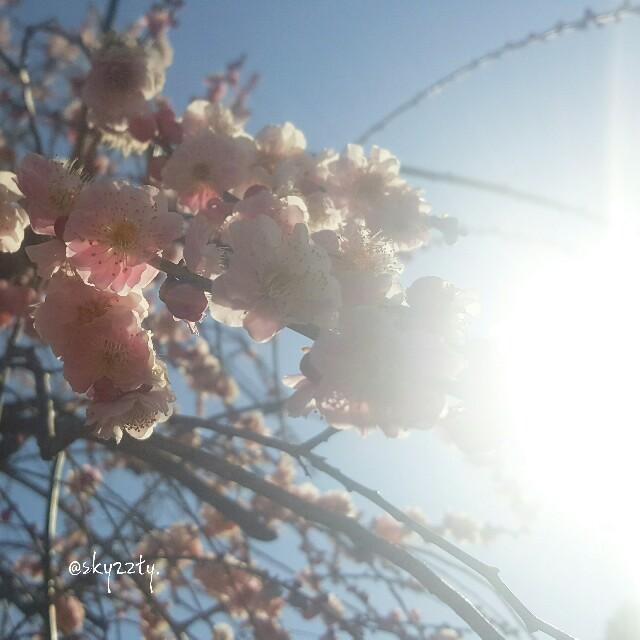 f:id:Crane221083:20170311175757j:image