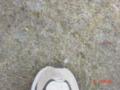 20050204085502