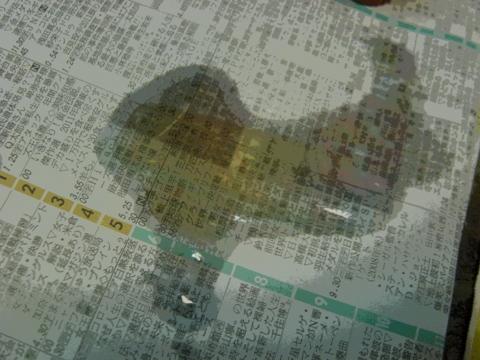 20111211202954