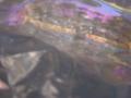 20111213164910