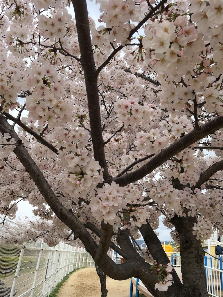 f:id:D_katsuragi:20170923185602j:image