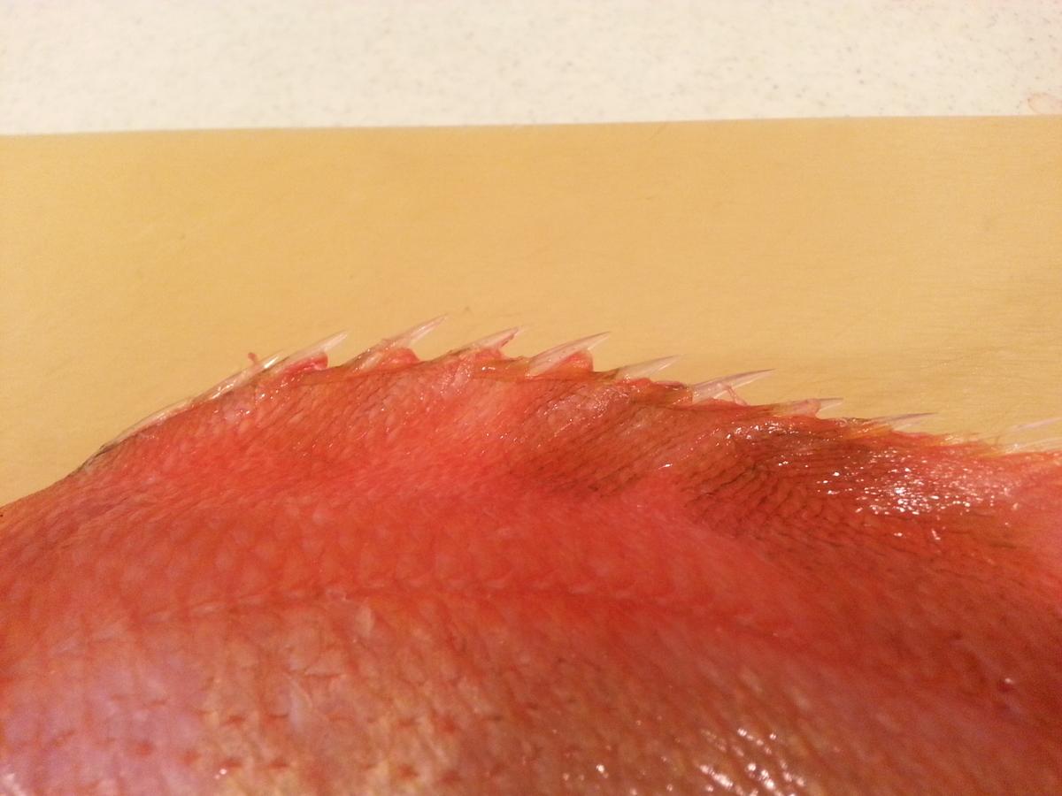 背びれのトゲの写真
