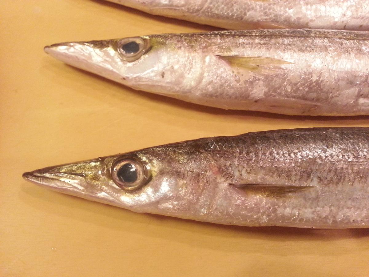 魚の顔の写真