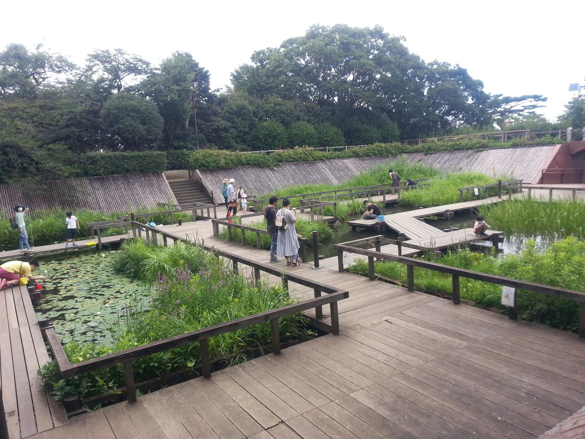 多摩川台公園 水生植物園